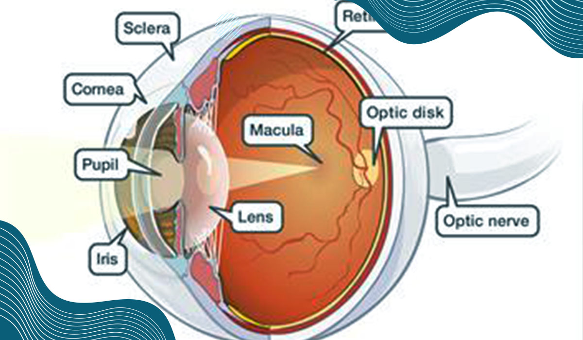 Interesting facts About Macular Degeneration