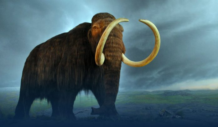 Geneticist George Church-Backed Company Raises $15 Million To Restore Woolly Mammoth from Disappearances